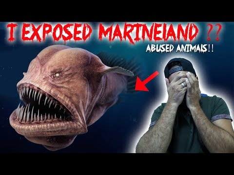 MARINELAND Is DOING THIS TO ANIMALS // THIS IS WHAT I CAUGHT ON CAMERA!! | MOE SARGI