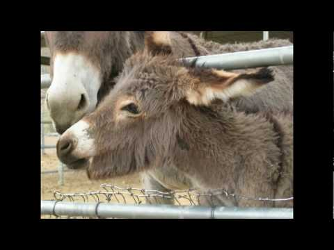 Trip to Wild Burro Rescue in Olancha, CA USA.