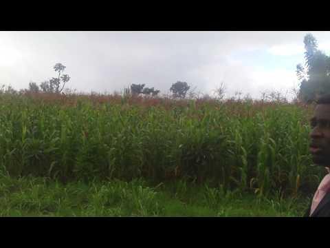 Pst Sam Adewumi @ Riamagata-Engu Land/Farm