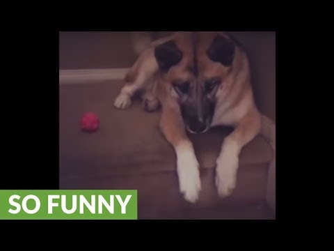 Selfish Dog Refuses To Share Ball With Puppy