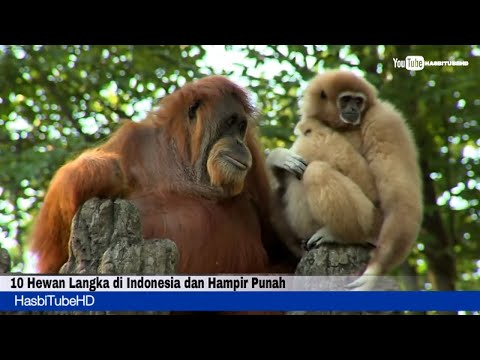10 Most Species Animals in Indonesia and Critically Endangered