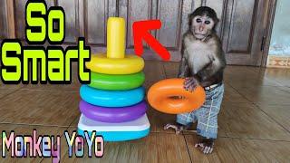 Monkey YoYo Jr is really smart when playing this toy |Monkey Baby YoYo