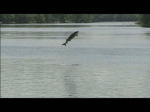 5-Year-Old Girl Killed, Family Injured After Massive Sturgeon Attacks Boat