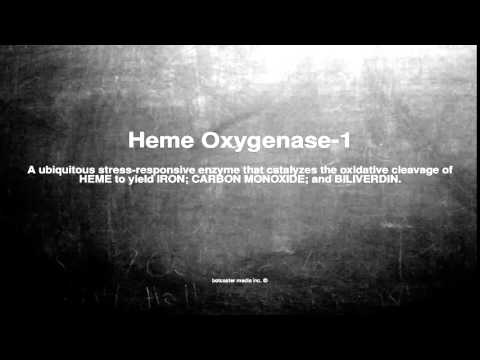 Medical vocabulary: What does Heme Oxygenase-1 mean