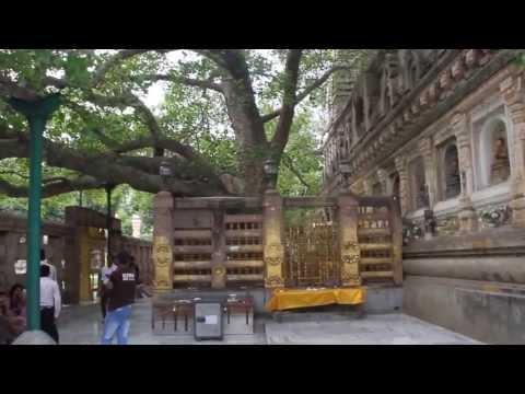 2013 India Trip: Bodh Gaya [Bodhi Tree, under which Buddha attained Enlightenment]