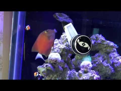 Whitetail Bristletooth Tang Update