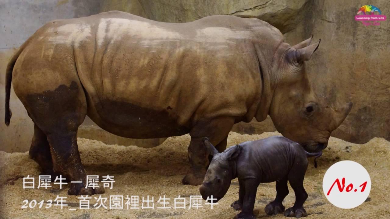 動物園遷圓30周年  交出亮麗成績單