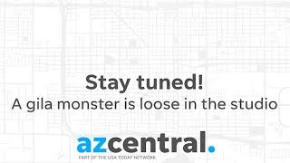 Live in the azcentral Studio: A Gila Monster!
