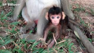 Emma And Grace Life 7 - Monkey Baby Emma Walk thumbnail
