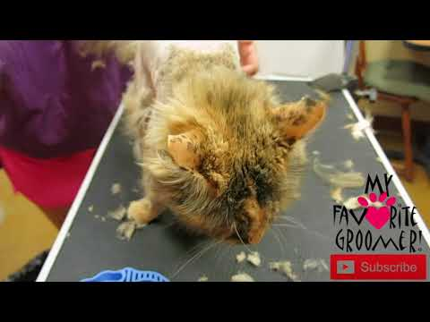 Is cat grooming dangerous