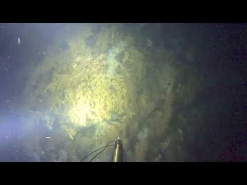 Night Dive Spearfishing Snorkelling at Mt Martha Melbourne Victoria Port Phillip Bay