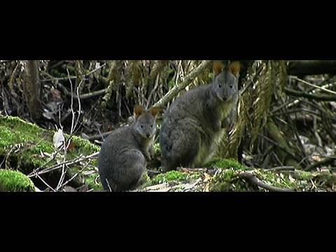Tasmania Travel Video Guide, Convicts and Forests