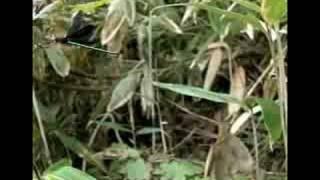 昆虫大冒険 ハグロトンボ 鮭川村