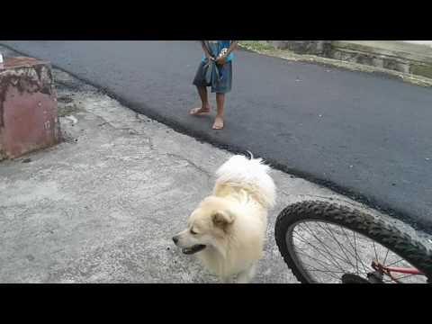 Video Lucu Bikin Ngakak Prank Ala Gajah Doovi