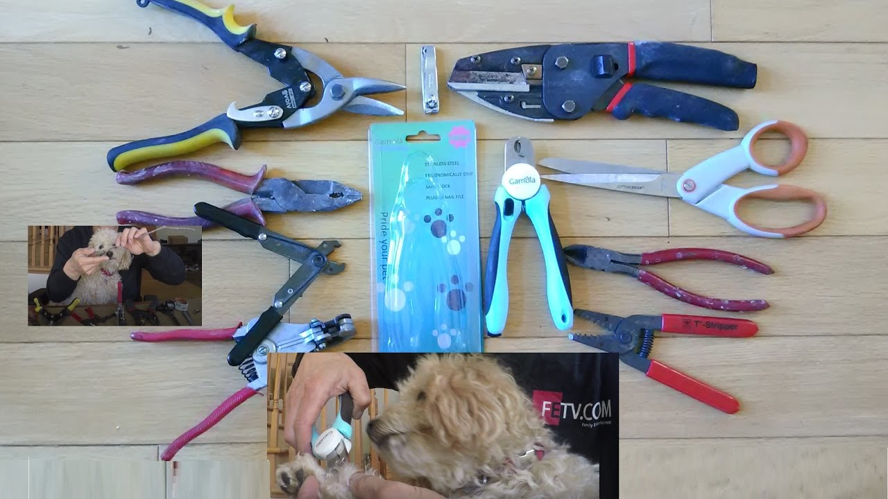 DIY Dog Nail Cutting Using Your Own Tools or Dog Nail Clippers - YouTube