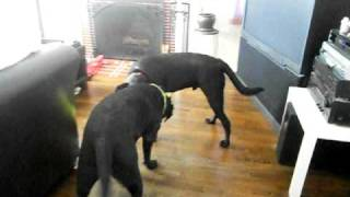 Homer and Anakin Listen to the song Squeaky Deaky and Play!