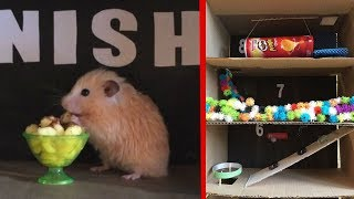11-level Maze for Cute Hamster. Will he rise to the finish?