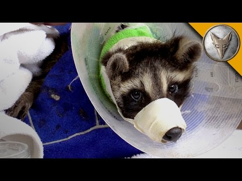 Thumbnail: Animal Rescue with the Ohio Wildlife Center