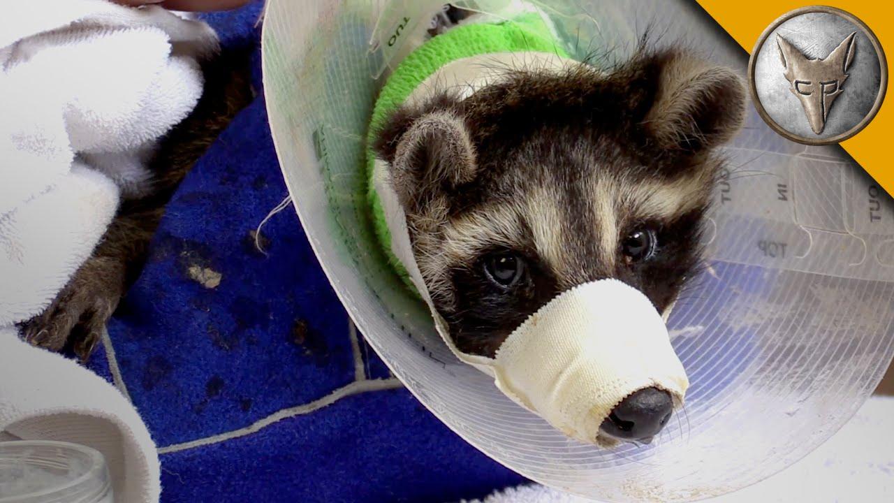 Dog Rescue Centers In Ohio