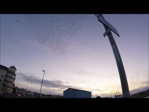 Flock of Starlings over Weymouth, Dorset.
