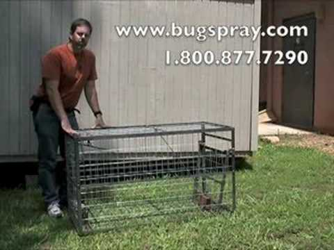 Hog Trap Junior