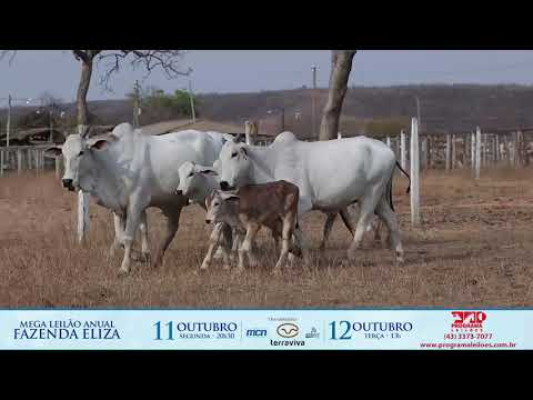 LOTE 209