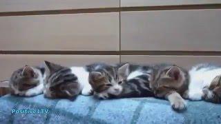 Pisica este sora cu somnul :))