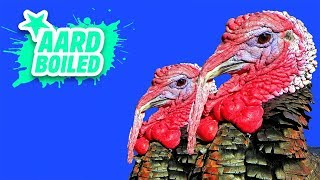 Advent Day 7 | Turkey Goose Song | Mr Weebl's Advent Calendar 2018