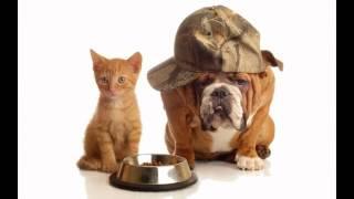корм для собак лидер(, 2014-10-20T18:37:24.000Z)