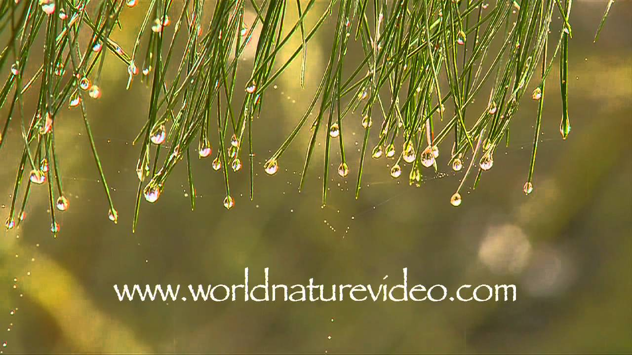 Rain Scenery And Drops Nature Video Stock Footage 0306