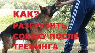 РАЗГРУЗКА СОБАКИ//отдых с собакой//Лайтатурм Дерби