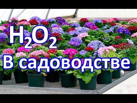 Перекись водорода как панацея в садоводстве / Перекись водорода для сада и огорода