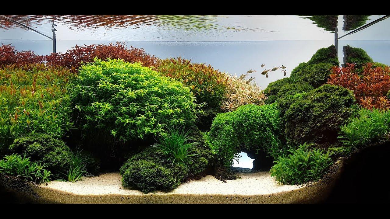 The Shore Aquascape Planted Aquarium Youtube