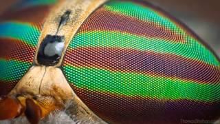 видео Макросъемка насекомых. Завораживающие фотографии от Adegsm