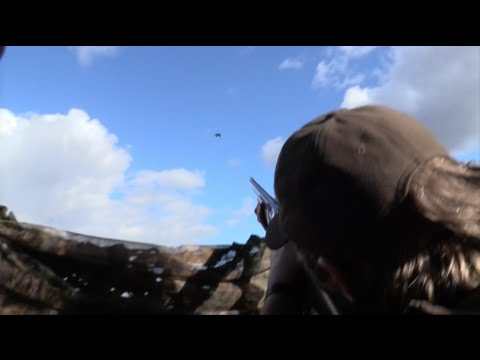 The Shooting Show – crow and pigeon control and Beretta A300 Xtrema