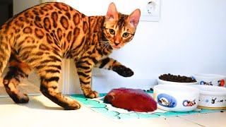 Murka cat is your liver!