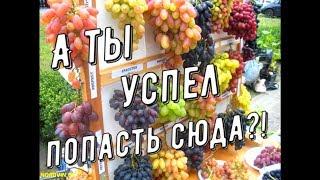"""Выставка ярмарка """" Янтарная гроздь винограда 2018 """""""