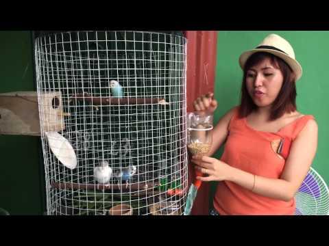 Birdscage/ recycle birds house . Lovebirds/Parakeets