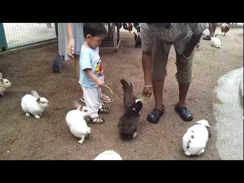 Feeding farm animals at Avillion Port Dickson Malaysia