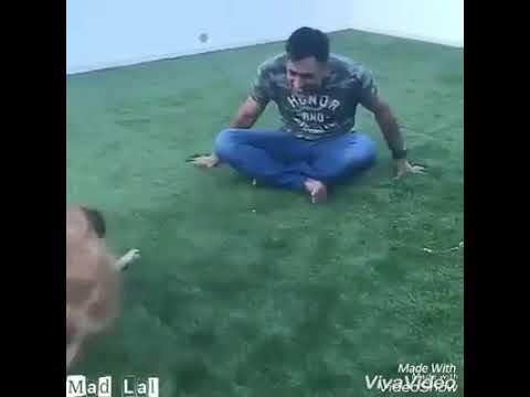 ##Dhoni dog spoof by PATEL& RAKESH BAS##