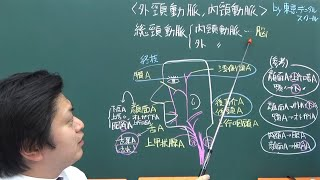 動脈 ゴロ 頸 外 頸外動脈