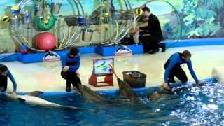 Сочи. Парк Ривьера. Дельфинарий(Сочи, парк Ривьера. Шоу в дельфинарии. Несколько сюжетов пришлось убрать (используется музыка). Морской..., 2016-02-28T11:47:36.000Z)