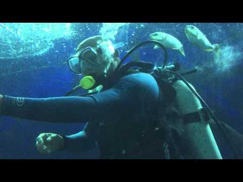 Singapore Underwater world Shark Dive