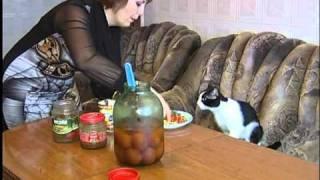 12.01.11 В Красноармейске живет кот-вегетарианец