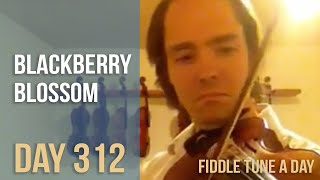 Blackberry Blossom - Fiddle Tune a Day - Day 312