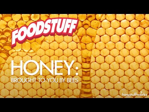 Honey: Brought to You by Bees | FoodStuff