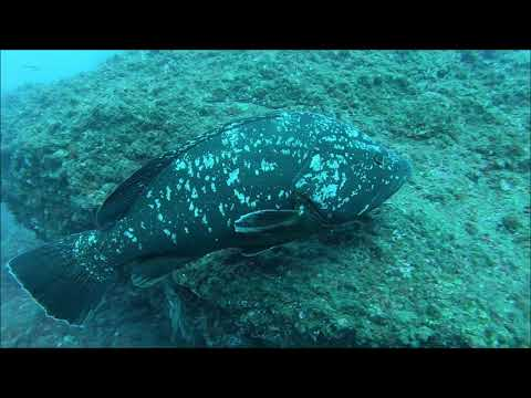 Scuba Diving Garajau Madeira 18 01 2020