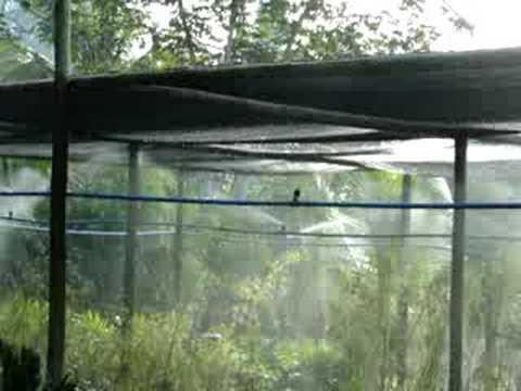 1 4 Npt >> Irrigação em Estufa - YouTube