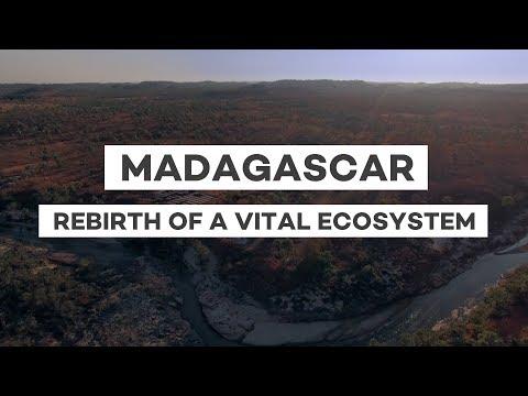 Reforestation in Madagascar: Rebirth of a vital ecosystem