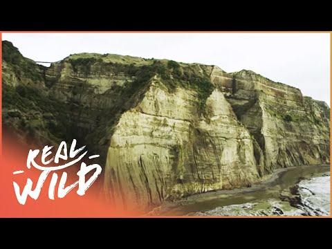 East Coast Gems [Wild Coasts Documentary] | Wild Things
